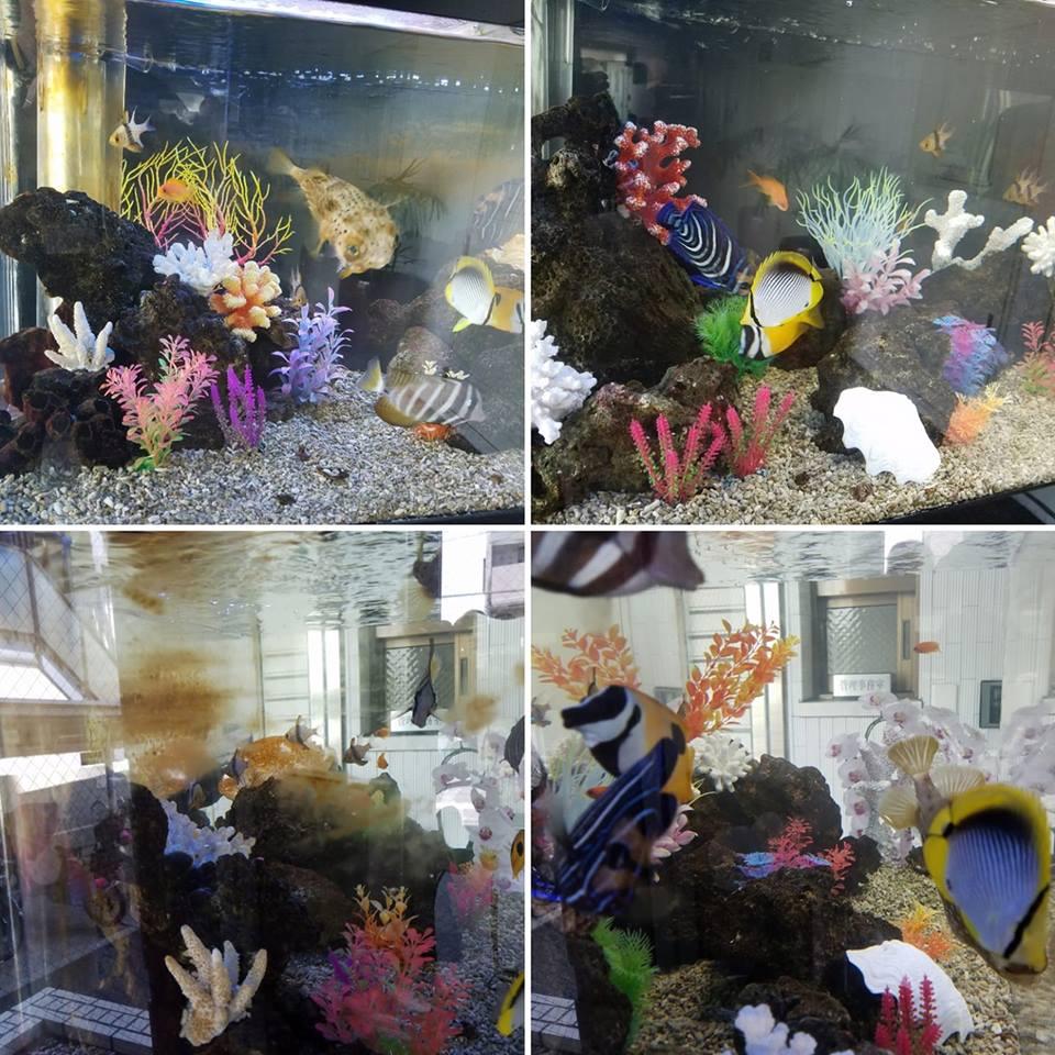 海水魚水槽のメンテナンス